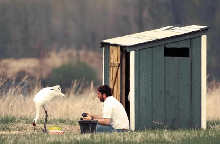 你沒看错,一个男人与一只雌鹤的旷世爱情