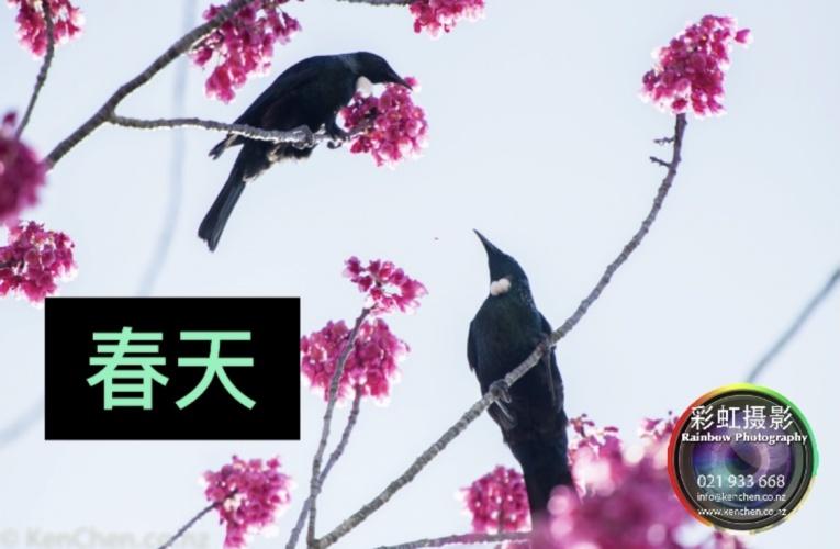 春天 (组图)
