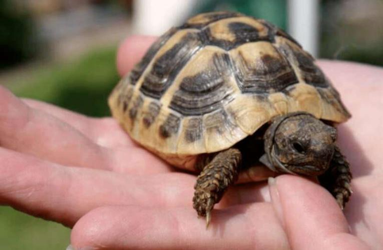 宠物乌龟失踪30年 直到家人打开储藏室的门…