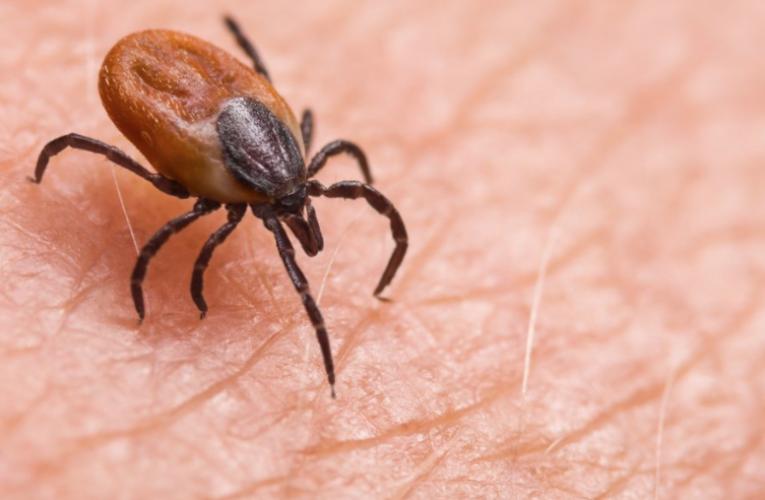 日本发现能传染人类新病毒:可致39度高烧